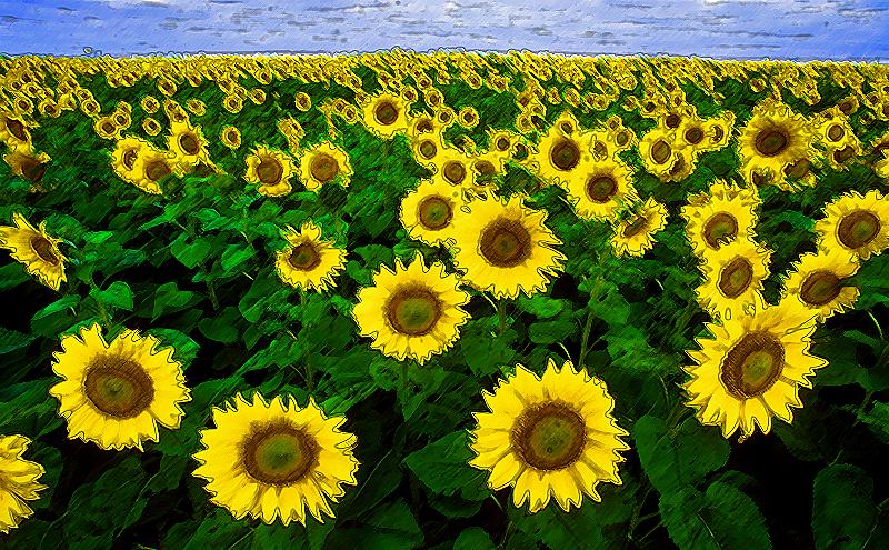 sonnenblumen-01